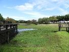 桃園1-4號生態埤塘