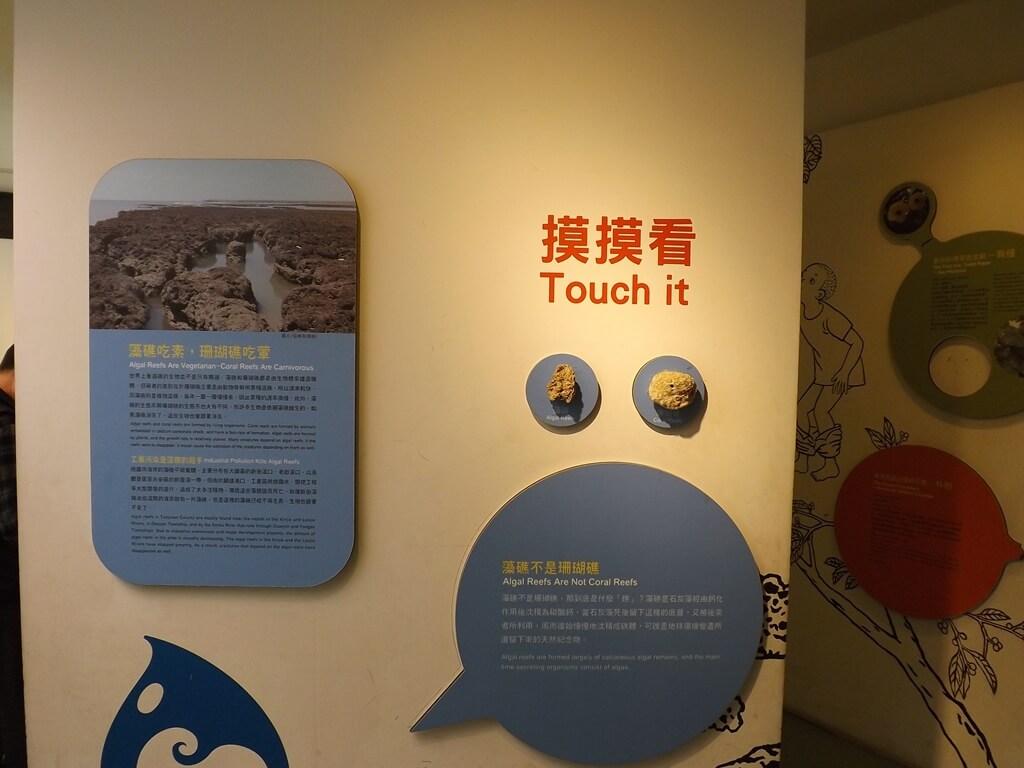中壢老街溪河川教育中心的圖片:澡礁與珊瑚的實品