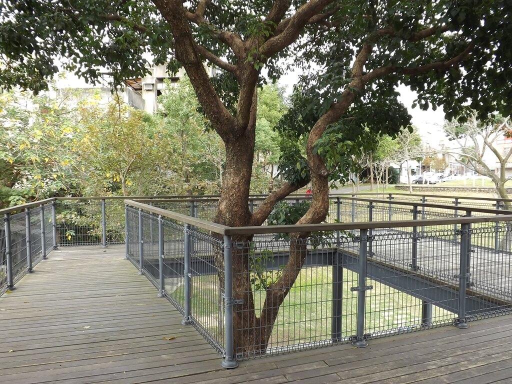 中壢老街溪河川教育中心的圖片:貫穿河川生態教育館戶外二樓的老樹