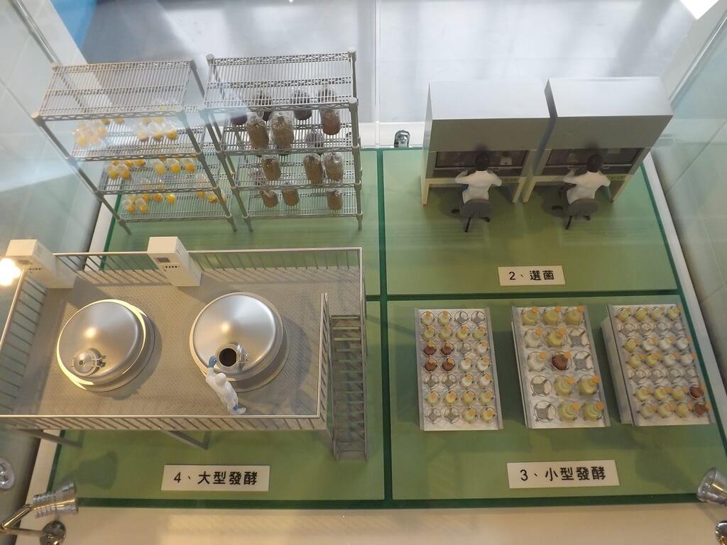 葡萄王健康活力能量館(葡萄王觀光工廠)的圖片:從選菌到發酵的研發過程模型