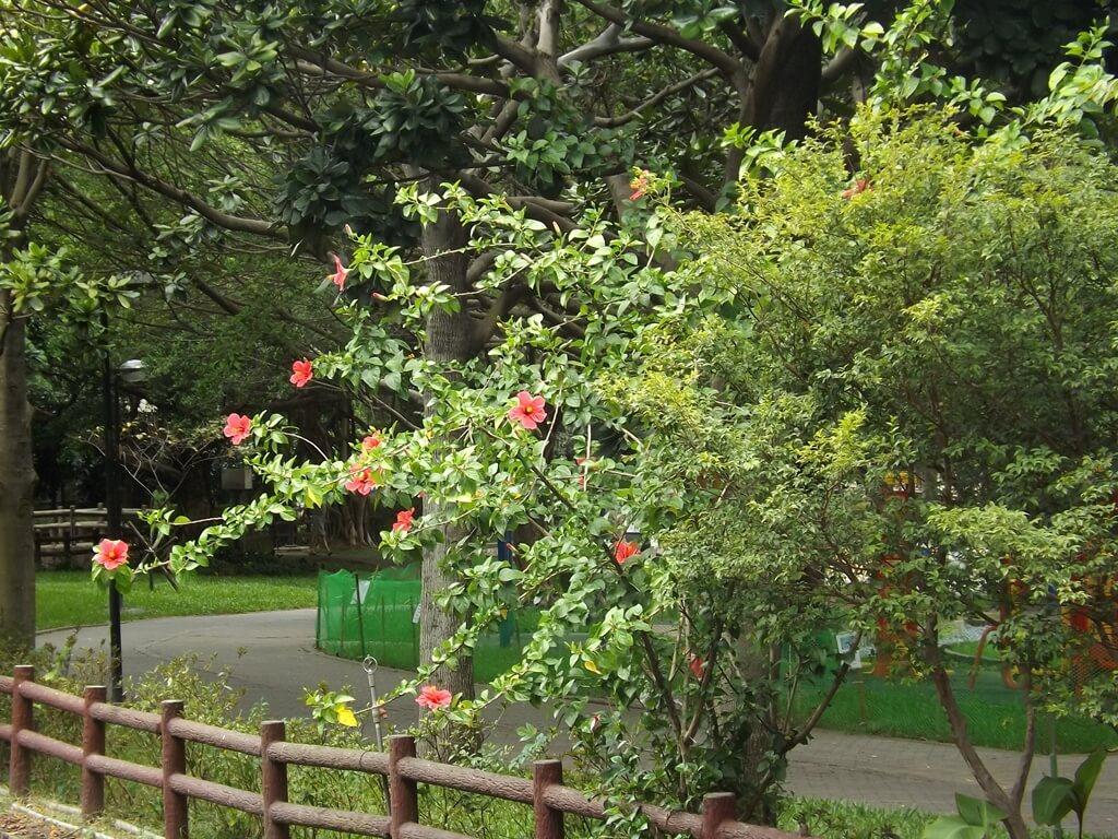 中壢莒光公園的圖片:隨處可見的花卉