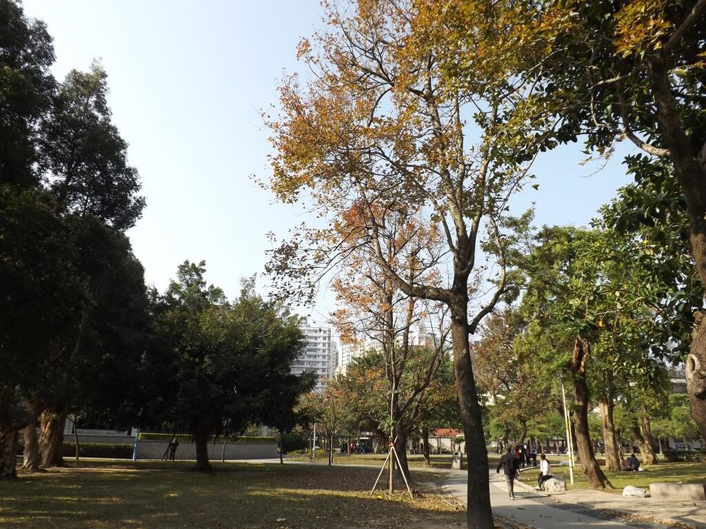 中壢中正公園的圖片:優美的楓樹