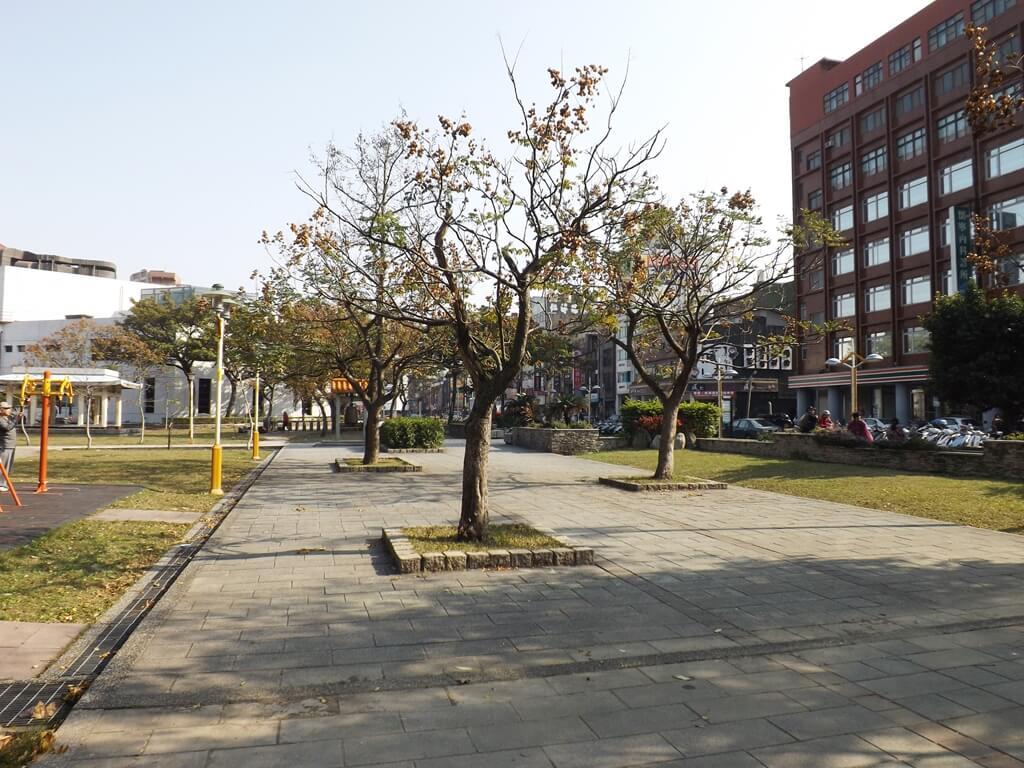 中壢中正公園的圖片:排列整齊的樹木