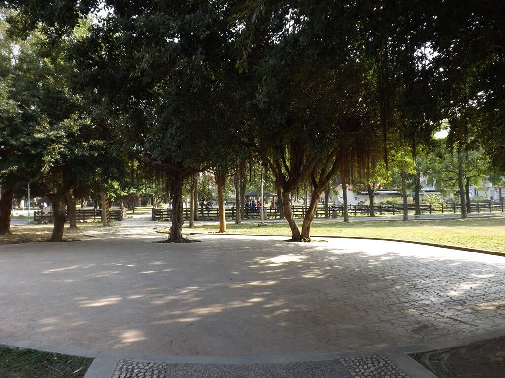 中壢中正公園的圖片:老樹下的廣場