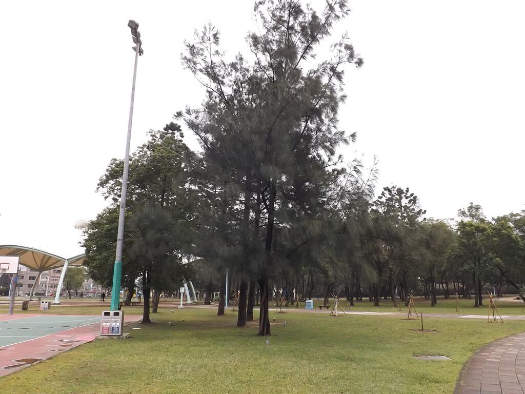 龍岡森林公園的圖片:隨處可見的高聳樹木