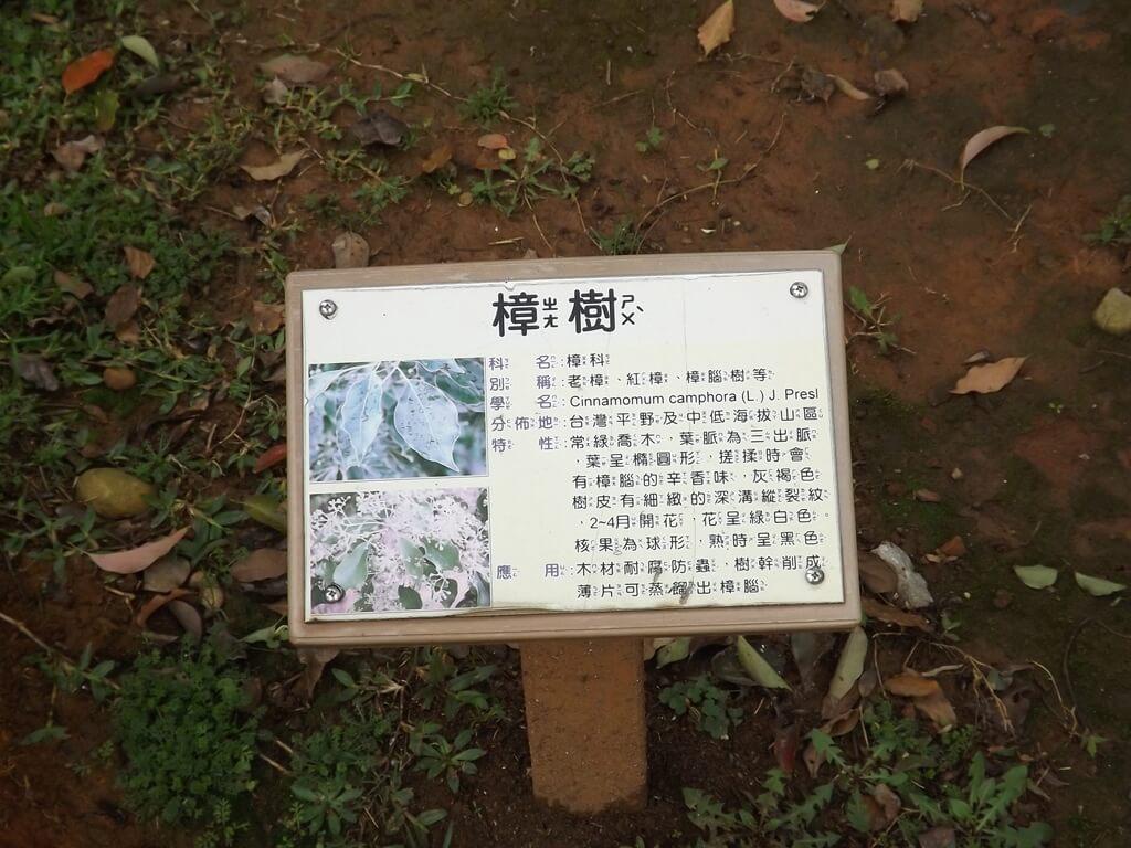 龍岡森林公園的圖片:樟樹簡介看板