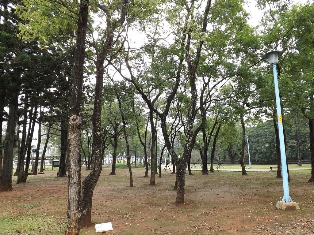 龍岡森林公園的圖片:此區有非常多棵樟樹