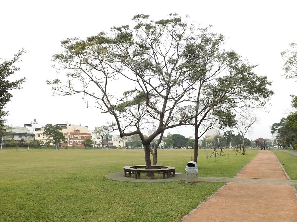 龍岡萬坪公園的圖片:隨處可見的大樹及垃圾桶