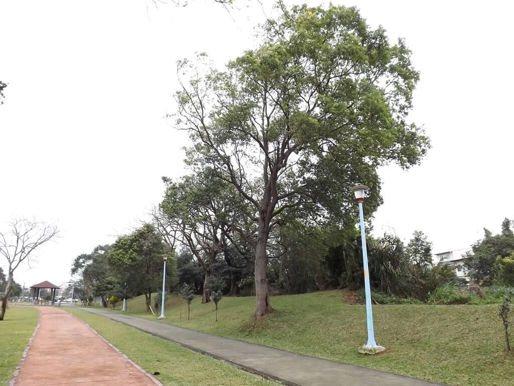 龍岡萬坪公園的圖片:行人步道外側也有許多林木