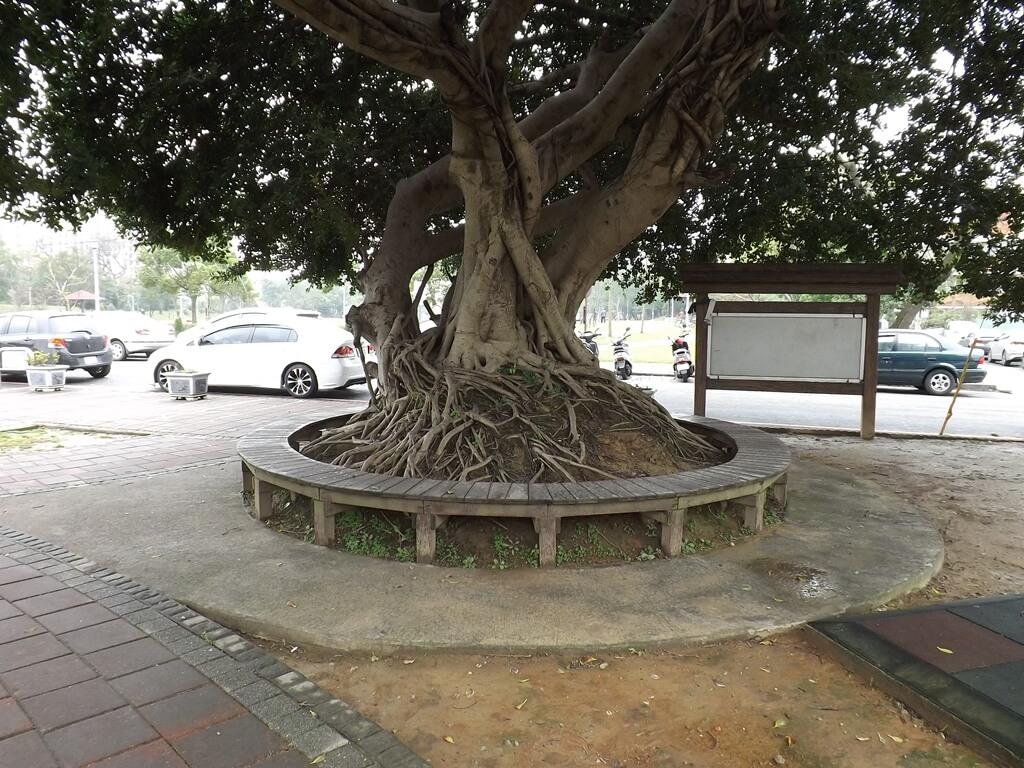 龍岡萬坪公園的圖片:老樹根