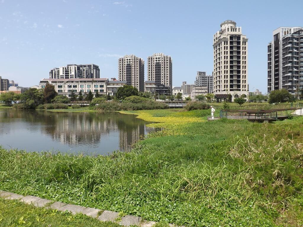 青塘園的圖片:池水邊佈滿了水生植物