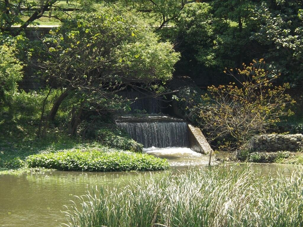 青塘園的圖片:排入池子的水
