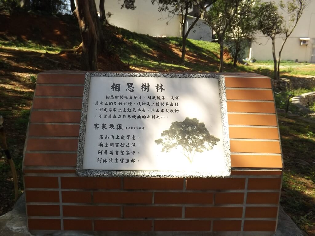 楊梅貴山客家文化公園的圖片:相思樹林