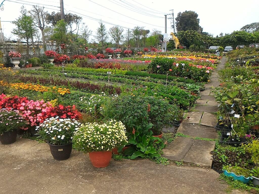 青松農場的圖片:花卉展售區銷售的各種花苗