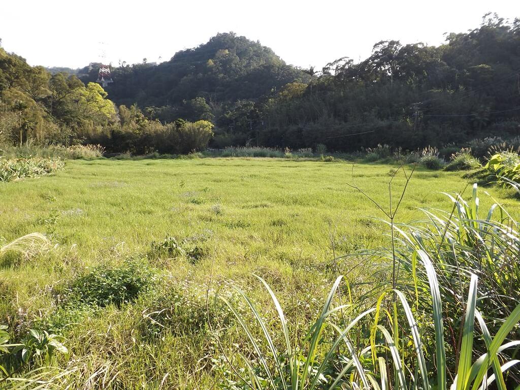 龍潭小粗坑古道的圖片:山腳下的青草園