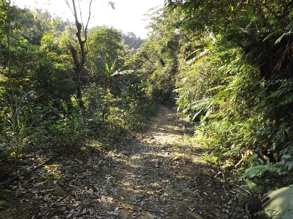 龍潭小粗坑古道的圖片:古道景 2