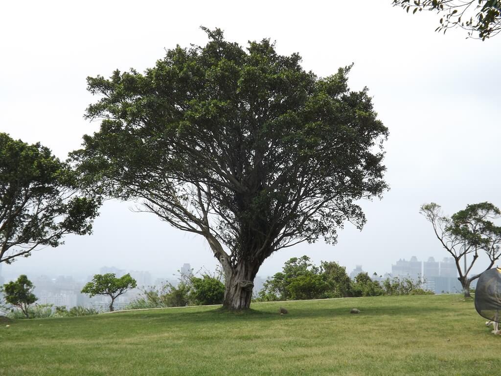 虎頭山環保公園的圖片:公園內的大樹