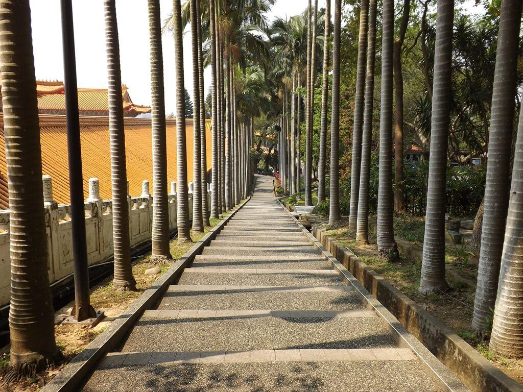 虎頭山公園(桃園市)的圖片:孔廟旁的椰林大道