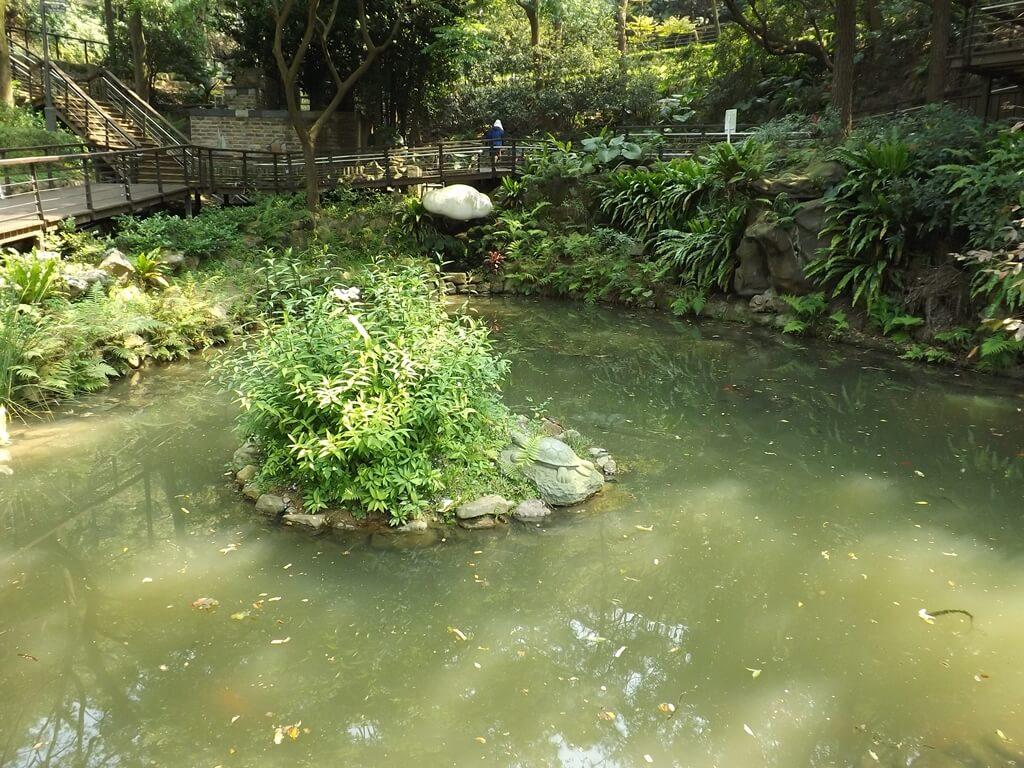 虎頭山公園(桃園市)的圖片:生態池景觀