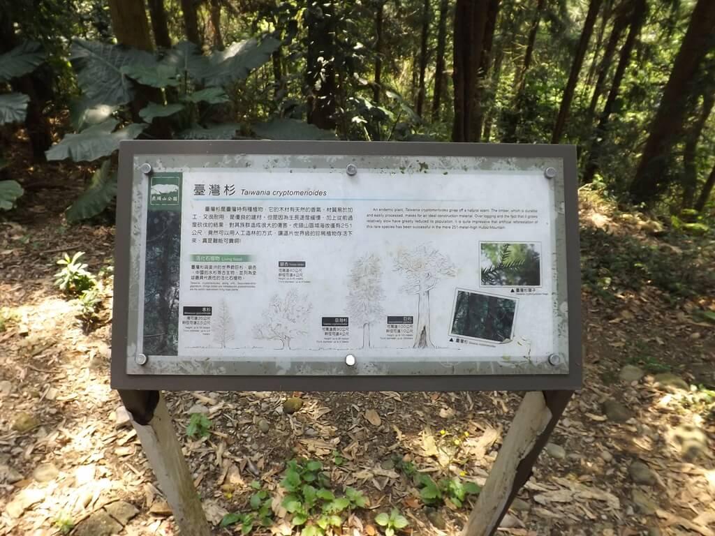 經國梅園的圖片:臺灣杉介紹看板