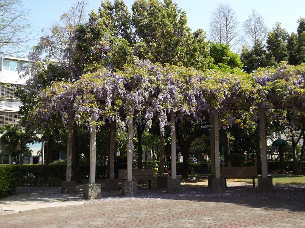 中壢龍德公園的圖片:盛開的紫藤花