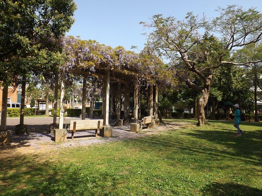 中壢龍德公園的圖片:紫藤花架後方的綠地與大樹