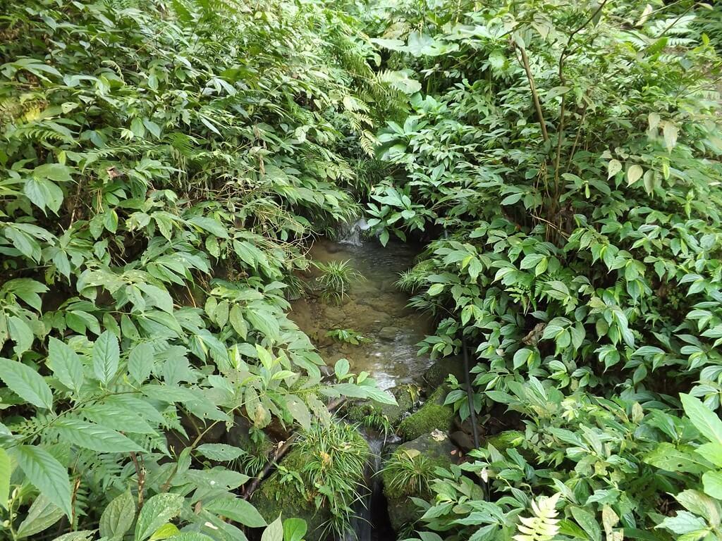 龍潭小粗坑古道的圖片:古道旁清澈的野溪