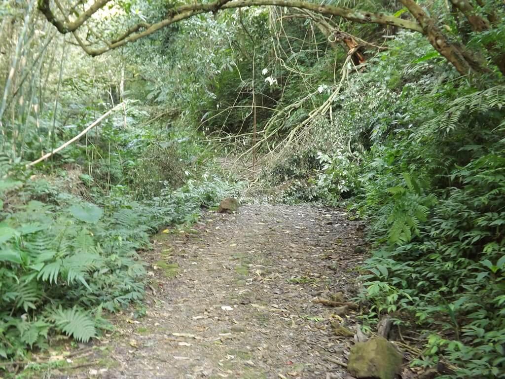 龍潭小粗坑古道的圖片:古道前方有颱風打下來的樹枝