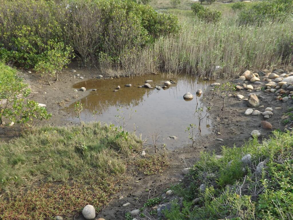 許厝港濕地的圖片:路邊的濕地可以看到許多螃蟹