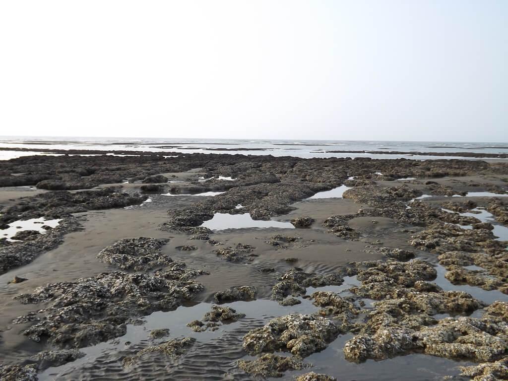 許厝港濕地的圖片:藻礁 3