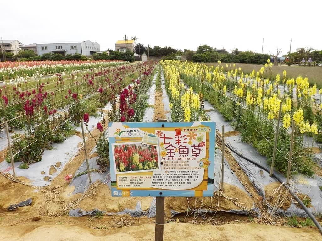 向陽農場的圖片:七彩金魚草看板
