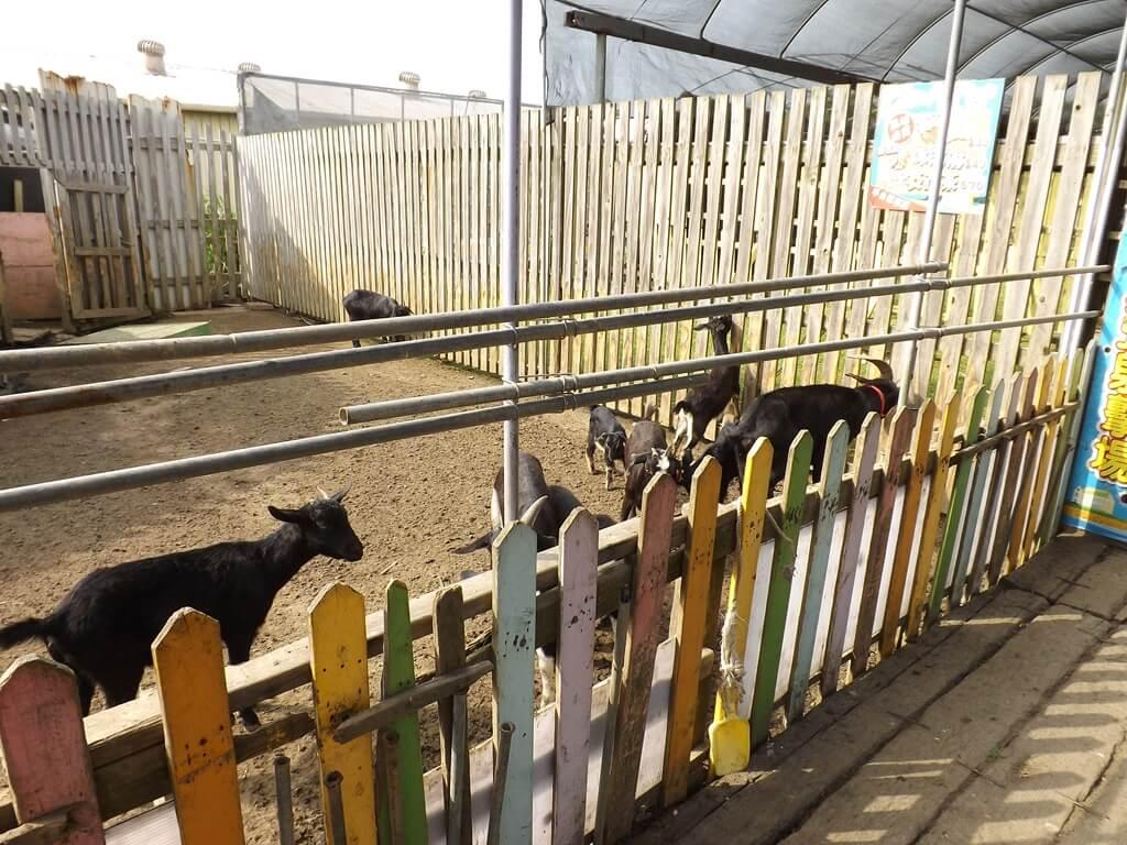 向陽農場的圖片:山羊圍籬
