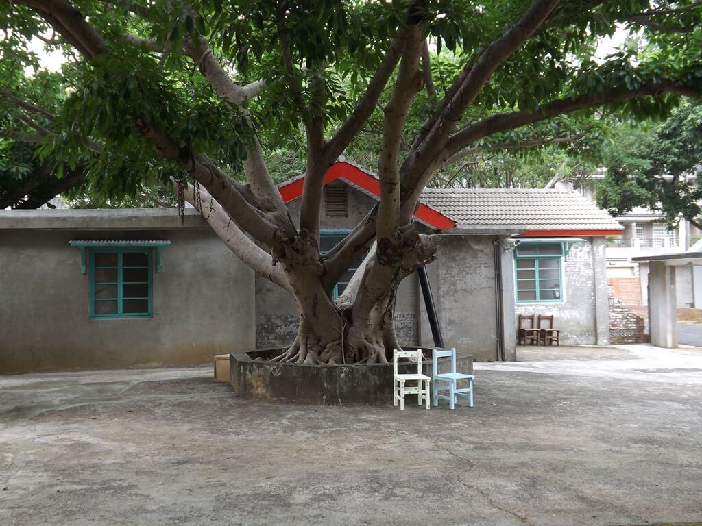 馬祖新村眷村文創園區的圖片:老樹與小椅子