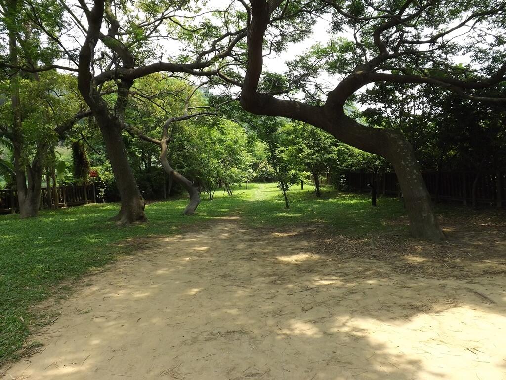 新竹青草湖的圖片:于飛島的小樹林