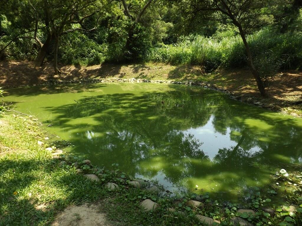 新竹青青草原的圖片:自然生態池的池水是綠色的