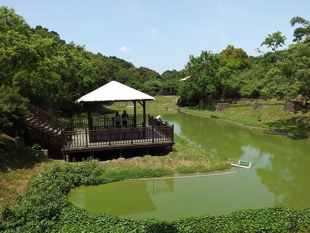 新竹青青草原的圖片:第一自然生態池以及茅草屋頂的涼亭