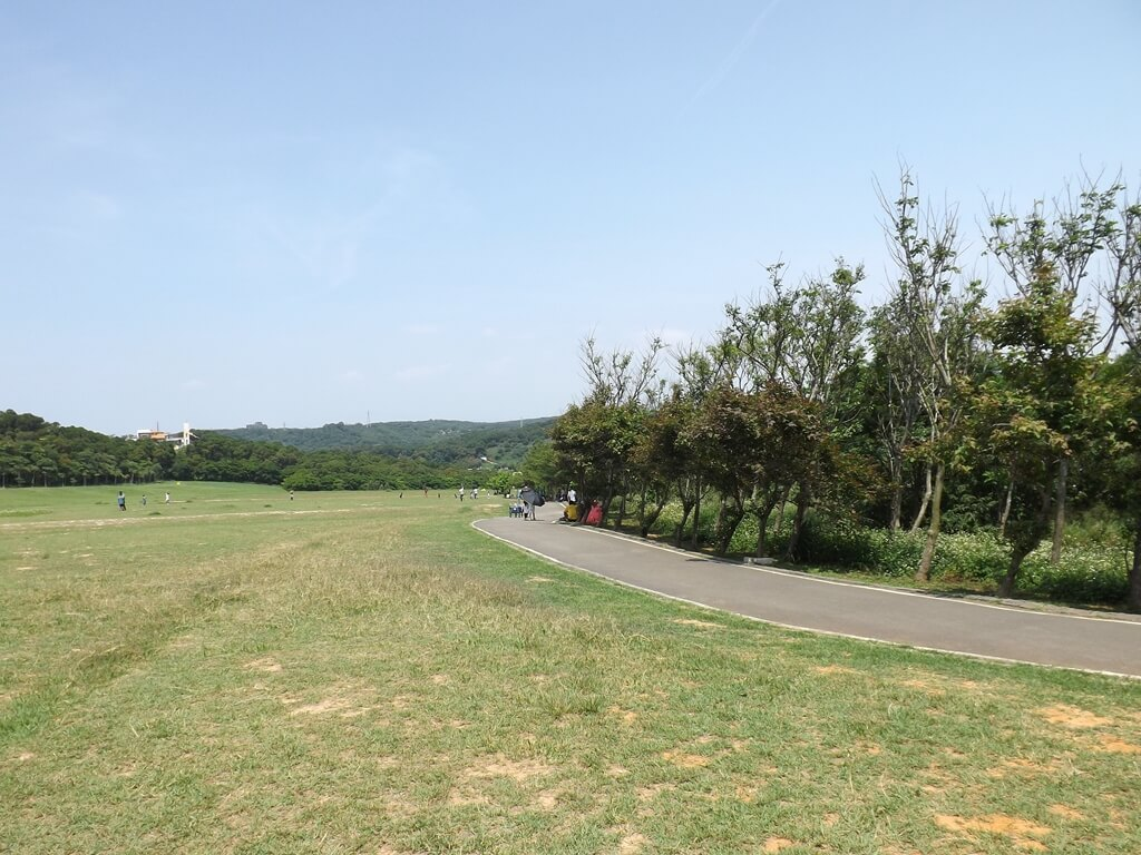 新竹青青草原的圖片:草原旁道路與樹木