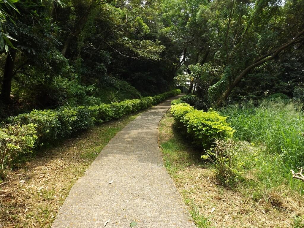 五酒桶山步道的圖片:步道剛開始相當平坦