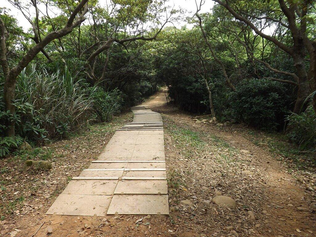 羊稠森林步道的圖片:部份石板鋪設的步道