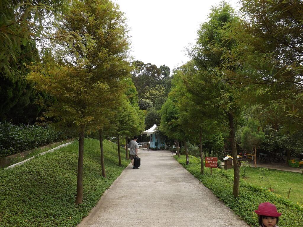 森林鳥花園的圖片:森林鳥花園的入口兩側都是落羽松