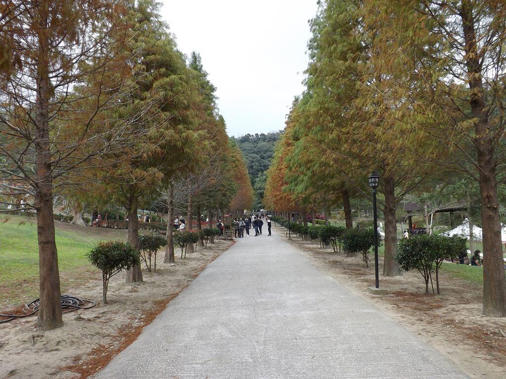 心鮮森林的圖片:落羽松步道