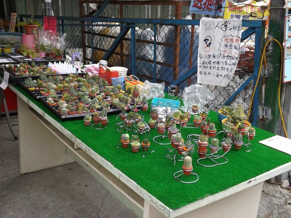 內灣老街的圖片:仙人掌攤