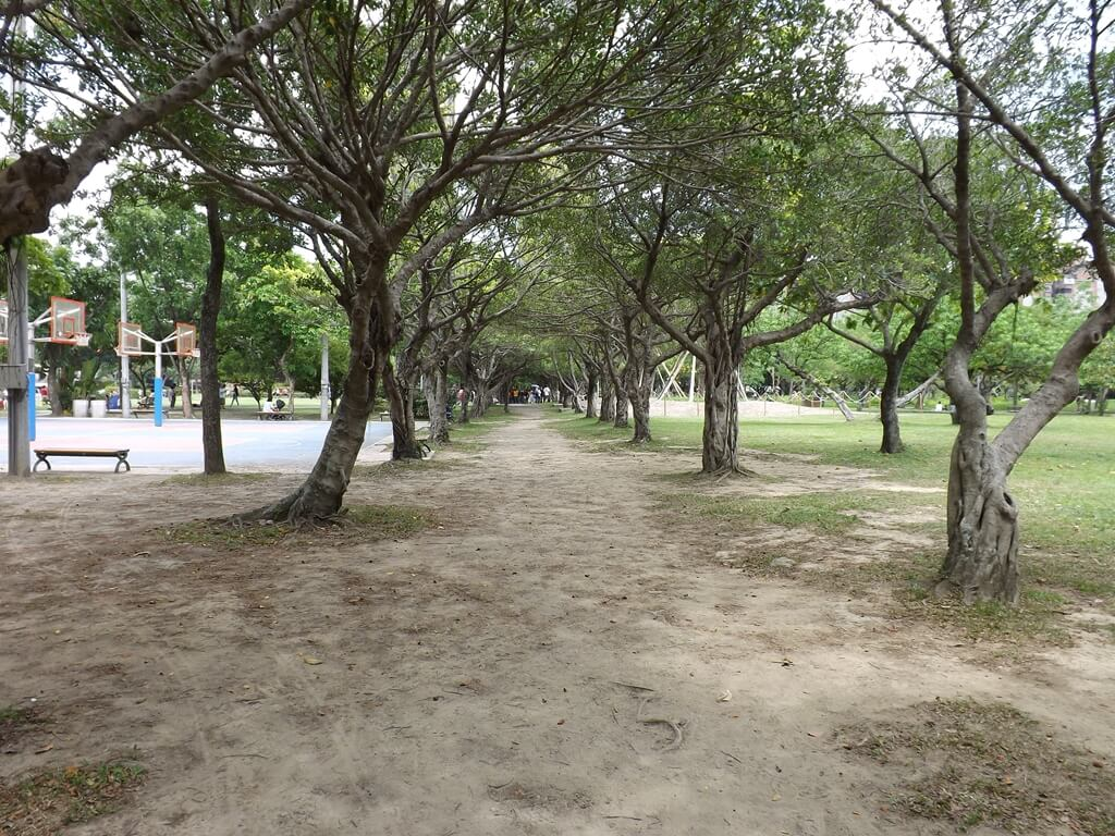 大安森林公園的圖片:籃球場旁整齊樹陰下的地面光禿禿
