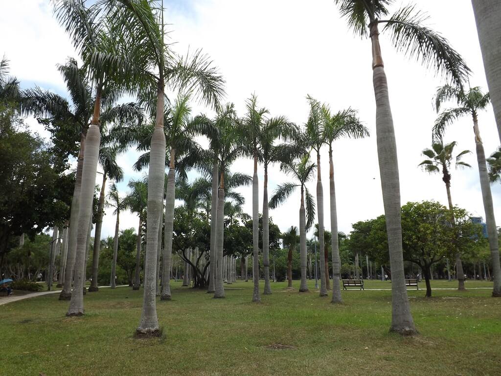 大安森林公園的圖片:椰子林