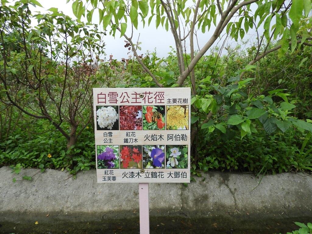 台灣地景花園 Taiwan Land Art Garden的圖片:白雪公主花徑主要花樹