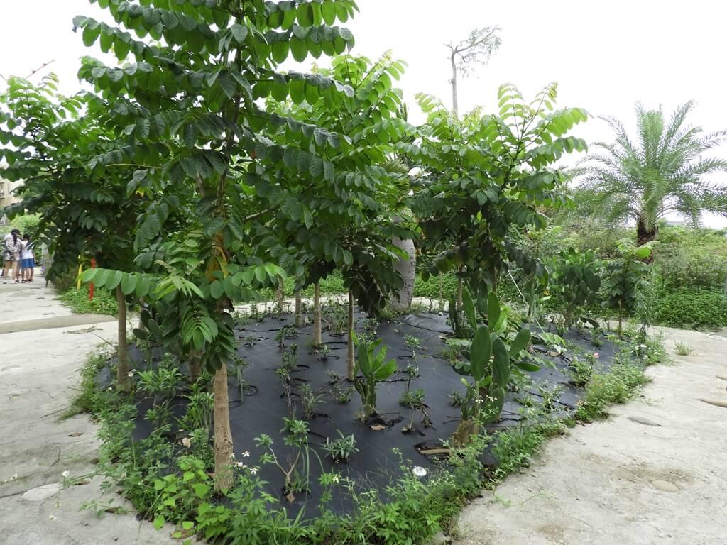 台灣地景花園 Taiwan Land Art Garden的圖片:沙漠玫瑰園
