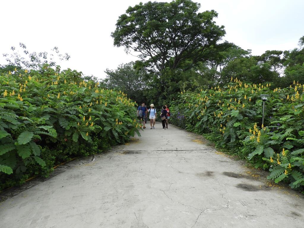 台灣地景花園 Taiwan Land Art Garden的圖片:黃色花叢間的水泥走道