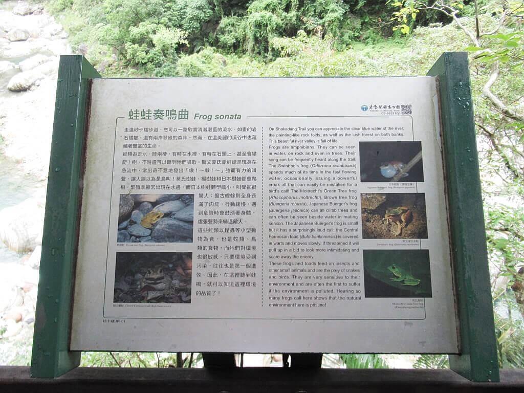 砂卡礑步道(太魯閣國家公園景觀步道)的圖片:蛙蛙奏鳴曲說明看板