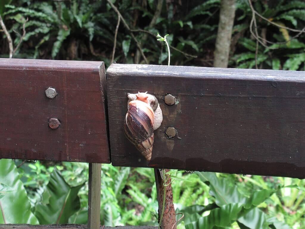 砂卡礑步道(太魯閣國家公園景觀步道)的圖片:圍欄上的大蝸牛
