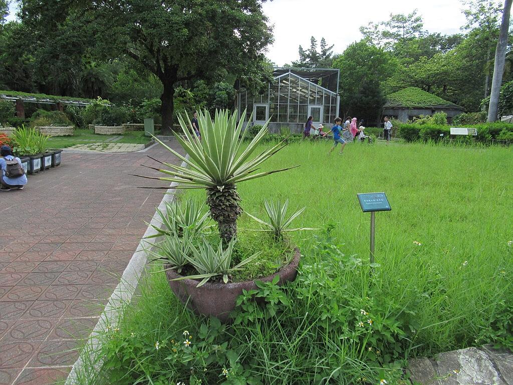 台北植物園的圖片:翠綠龍舌蘭